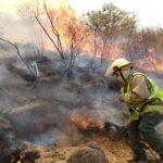 Cambio climático provocará incendios más intensos y mayor deforestación