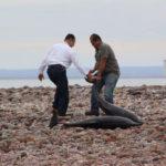 Mueren 20 delfines al quedar varados en una playa mexicana