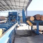 Invierten 1.6 mmdp en sector forestal