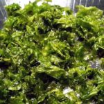Algas marinas, una rica y poco explorada alternativa de nutrición