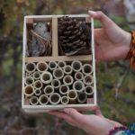 """""""Hoteles"""" para proteger a las abejas silvestres en el oeste de México"""