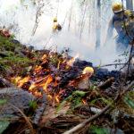Esperan poca afectación en bosques por incendios forestales