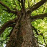 Árboles, testigos mudos del cambio climático y objeto de estudio científico