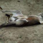 Un canguro muere en un zoo de China por los ladrillazos de visitantes