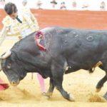 El mexicano Arturo Saldivar corta solitaria oreja en Texcoco