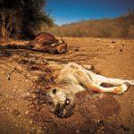 Calentamiento global vinculado a la mayor extinción sobre la Tierra