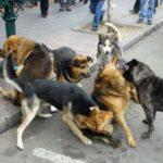 Especialista sugiere vacunar a mascotas contra la rabia