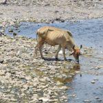 Municipios de Durango son declarados con afectaciones por sequía