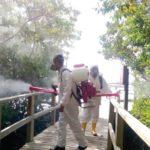 Galápagos avanza en el combate a insecto que chupa la sabia de los manglares