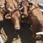 Promueven participación de Durango  en México Alimentaria Food Show