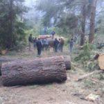 Greenpeace realiza proyección gigante contra deforestación en norte argentino