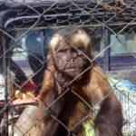 Rescatan más de 10.000 animales del comercio ilegal en Perú durante 2017