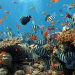 Los mares mexicanos, garantía para alimentar a la población del futuro