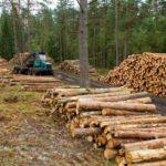 Se prepara proyecto educativo para  aprovechar recursos forestales: SEED
