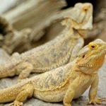 Un cambio en el modo de generar neuronas separó el cerebro humano del reptil