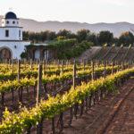 Valle de Guadalupe, la cuna de los vinos mexicanos que buscan sorprender
