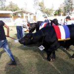 Cuarto frigorífico paraguayo multado por caso de carne importada sin licencia