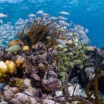 WWF celebra la retirada del arrecife de Belice del patrimonio en peligro