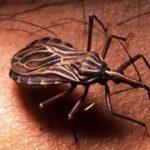 Comienza la misión de la OPS que evalúa la situación del Chagas en Paraguay