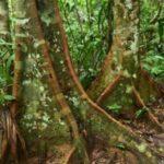 Bosques andinos que se creían vírgenes revelan años de explotación humana