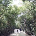Selva maya, sin recursos para gestionar su patrimonio natural, dice experto