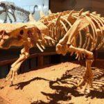 Resuelto el origen de uno de los esqueletos animales más antiguos conservados
