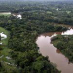 Estudio revela papel de ríos amazónicos en mantenimiento de diversidad aviar