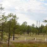 Avanza reforestación en Durango
