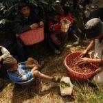 C.Rica destinará 10 millones de dólares en créditos para descarbonizar café