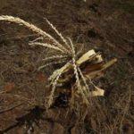 Hernández declara emergencia en el Corredor Seco hondureño por la sequía