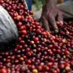 Anuncian campaña para alertar a consumidores de crisis de productores de café
