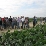 El cambio climático dará alas a plagas que arrasan cultivos, según expertos