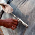 Gobierno colombiano iniciará vacunación de bovinos para evitar fiebre aftosa