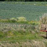 Piden apoyo a mujeres rurales para favorecer seguridad alimentaria y clima