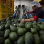 Exportadores destacan dinamismo, pero les preocupan las pymes en Costa Rica