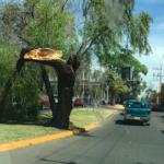 Vientos han derribado árboles, anuncios, etc., sin lesionados hasta ahora