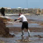 Autoridades e iniciativa privada se unen para combatir el sargazo en Cancún